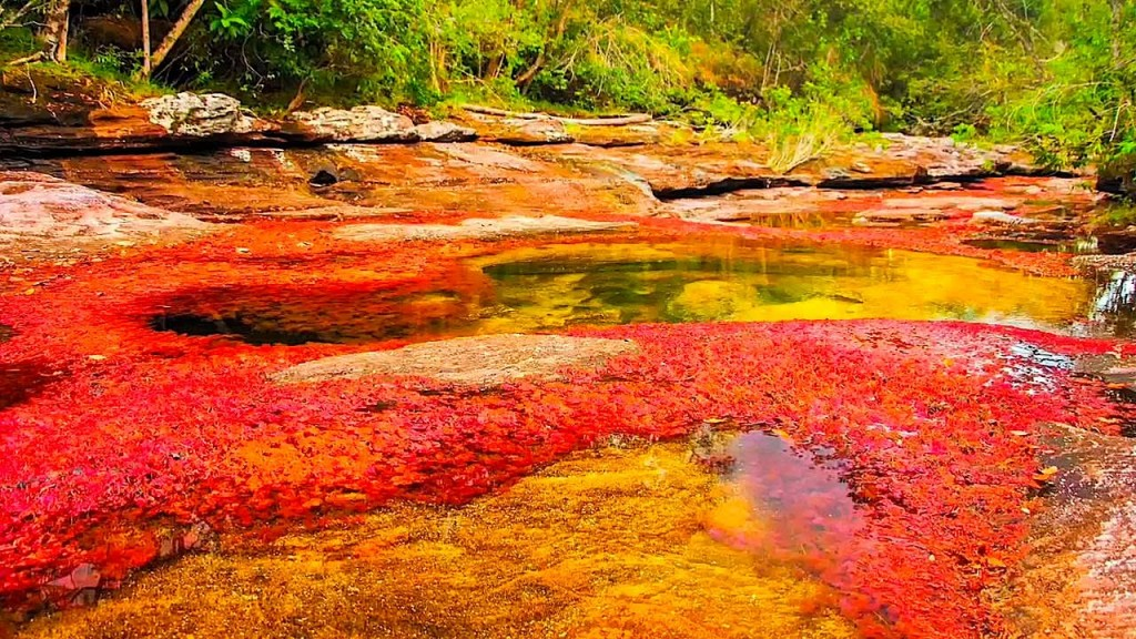 Song-Cano-Cristales