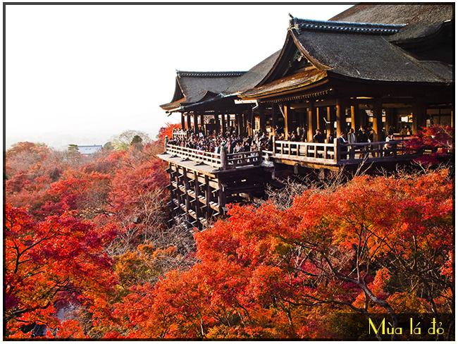 Tour du lịch Nhật Bản hot : Ngắm lá đỏ ở Tokyo – Kyoto