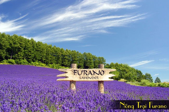 nong trai Furano, tour du lich nhat ban 6 ngay 5 dem