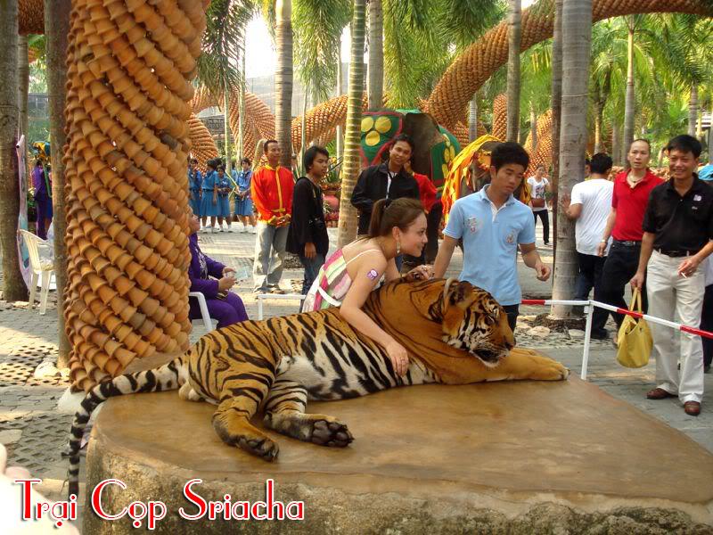 Trại Cọp Sriacha