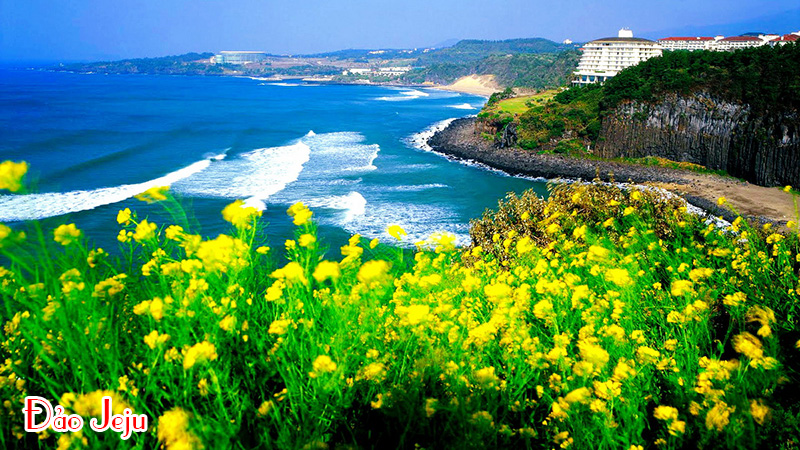 Tour du lịch Seoul – Jeju – Pusan 7 ngày giá hấp dẫn