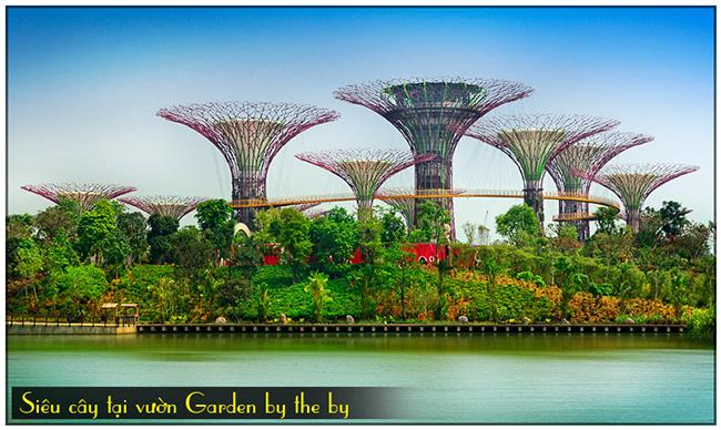 Siêu cây tại vường Garden by the bay