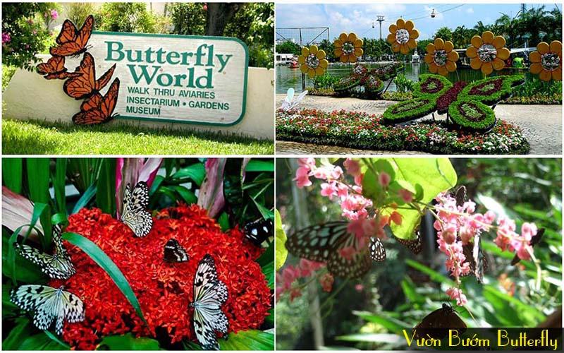 vuon-buom-Butterfly-Garden, tour du lich bangkok 4 ngay
